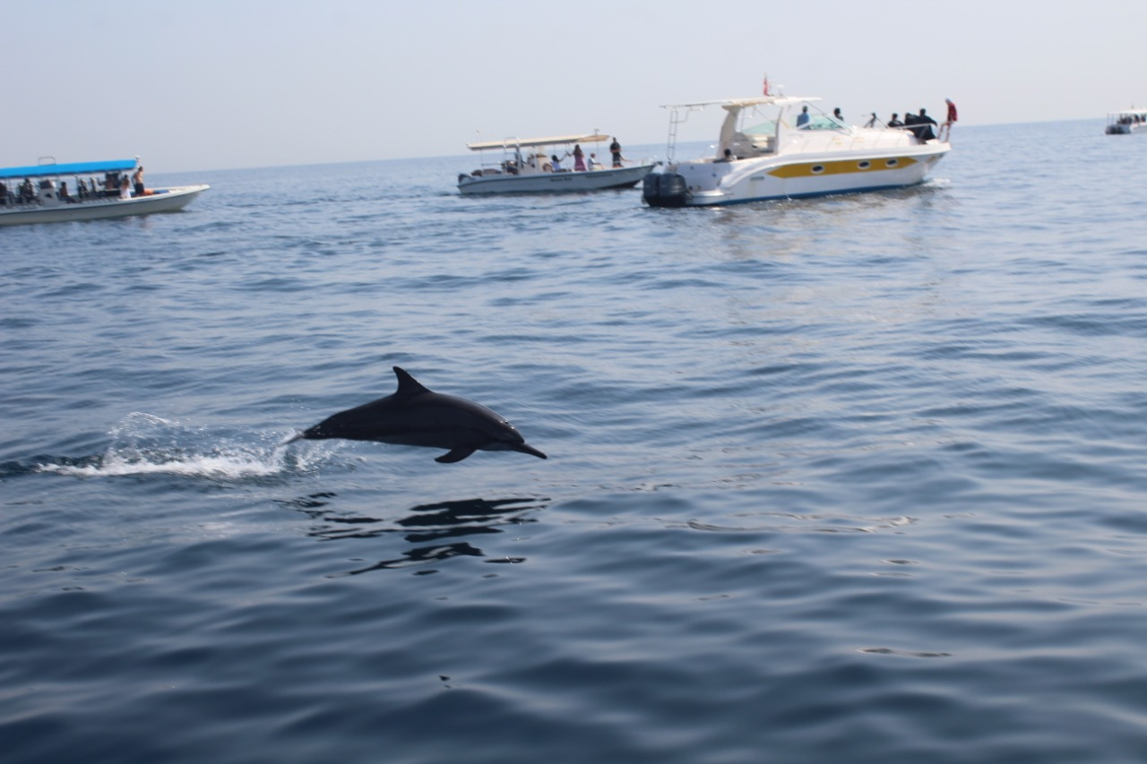dolphin-watching